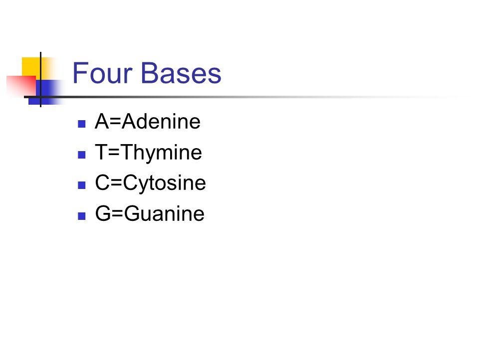 Four Bases A=Adenine T=Thymine C=Cytosine G=Guanine