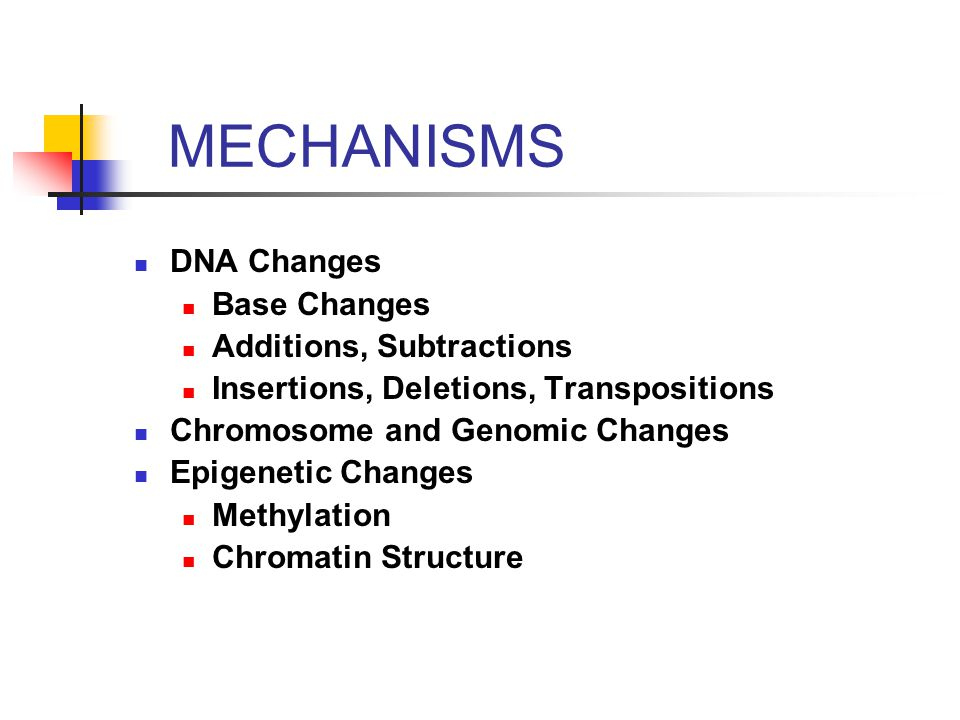 MECHANISMS DNA Changes Base Changes Additions, Subtractions Insertions, Deletions, Transpositions Chromosome and Genomic Changes Epigenetic Changes Methylation Chromatin Structure