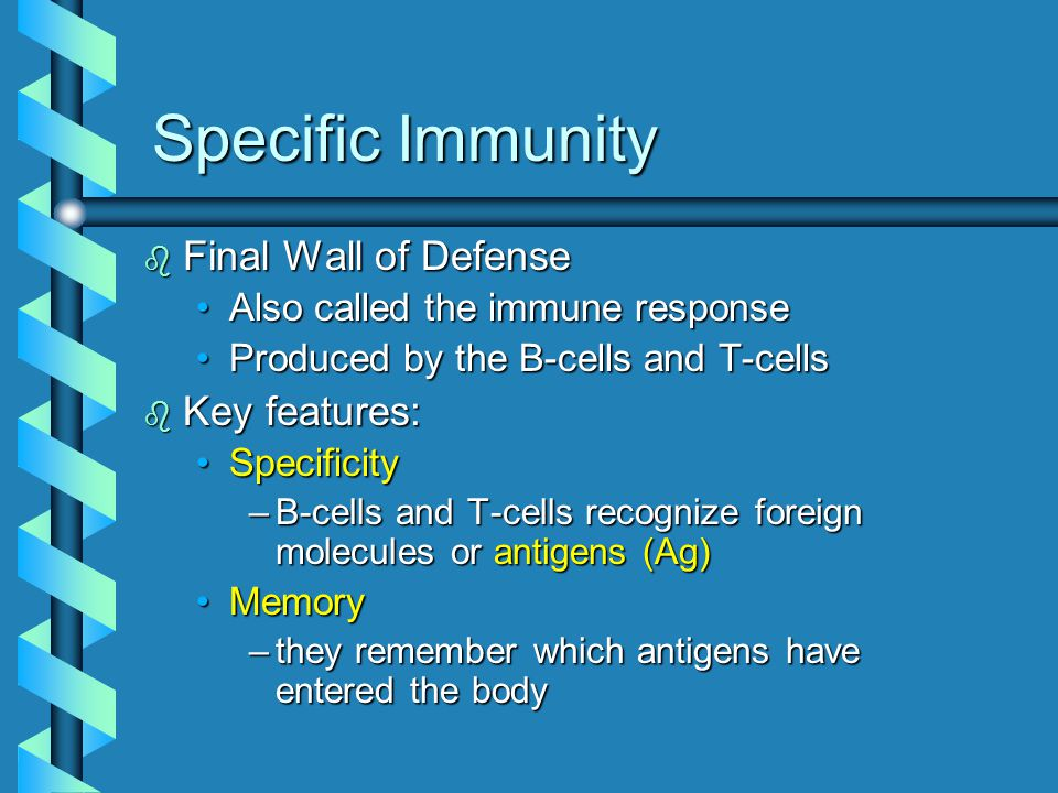 Specific Immunity b Final Wall of Defense Also called the immune responseAlso called the immune response Produced by the B-cells and T-cellsProduced by the B-cells and T-cells b Key features: SpecificitySpecificity –B-cells and T-cells recognize foreign molecules or antigens (Ag) MemoryMemory –they remember which antigens have entered the body