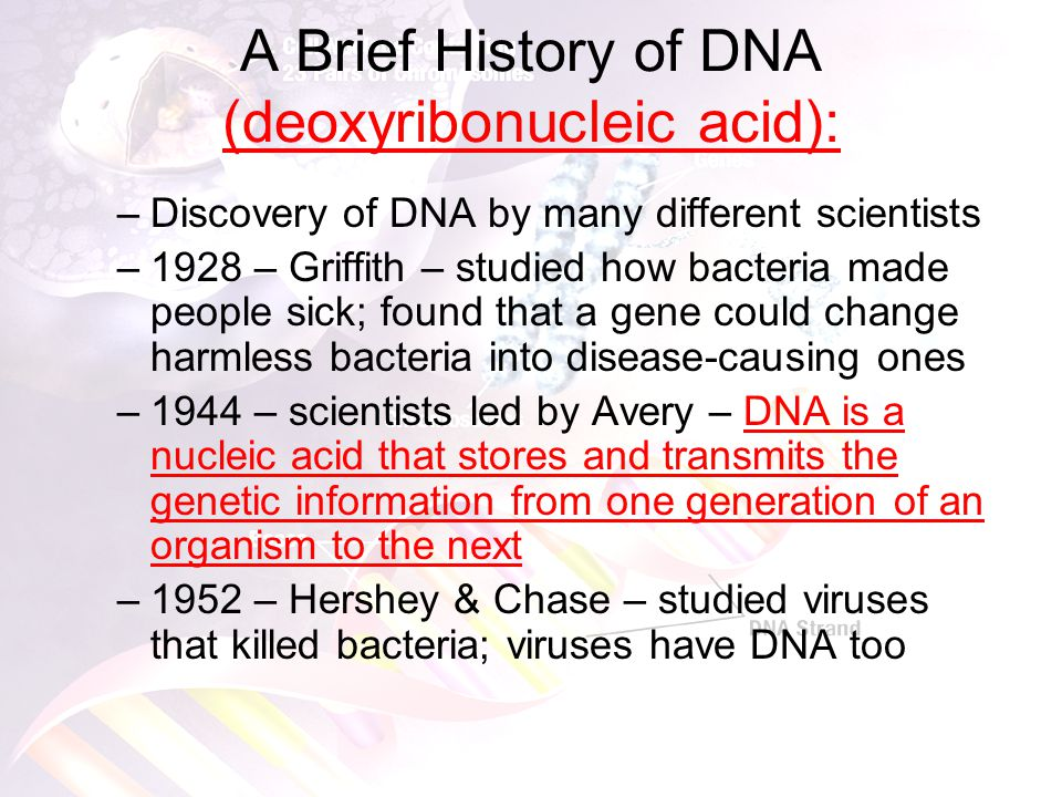 Structure of DNA Three important jobs of DNA: –Carry information from one generation to the next –Put information to work by determining the heritable characteristics of organisms –Has to be easily copied