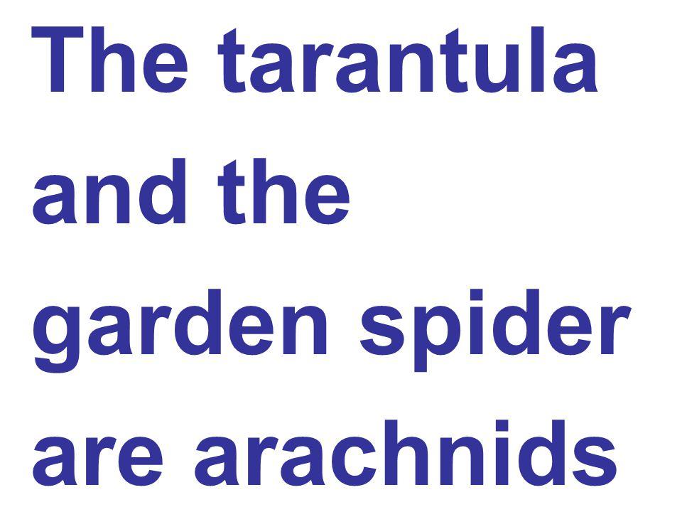 The tarantula and the garden spider are arachnids