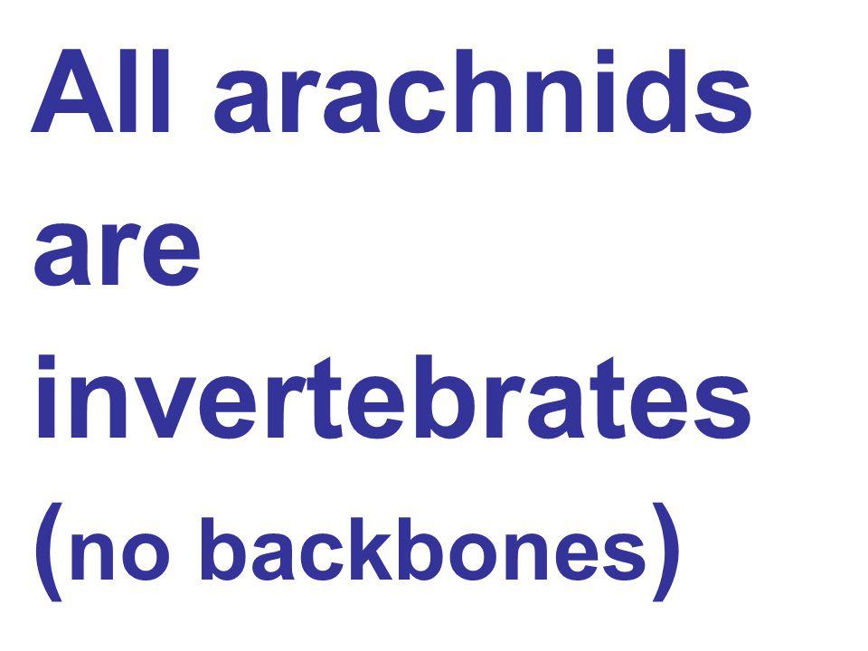 All arachnids are invertebrates ( no backbones )