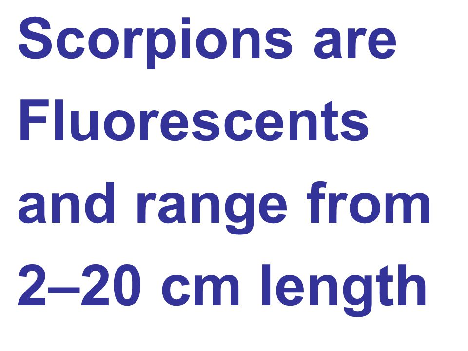 Scorpions are Fluorescents and range from 2–20 cm length