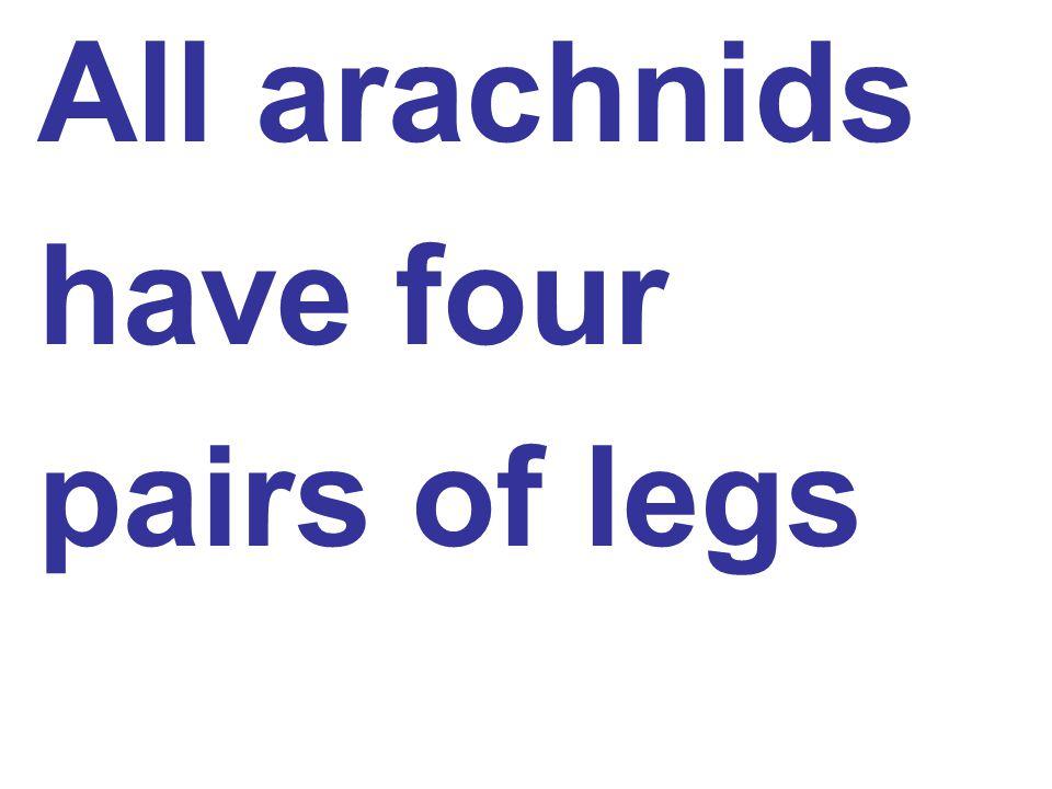 All arachnids have four pairs of legs