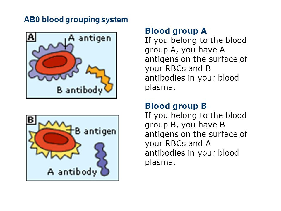 Blood Groups, Blood Typing and Blood Transfusions The discovery of blood groups Experiments with blood transfusions, the transfer of blood or blood components into a person s blood stream, have been carried out for hundreds of years.