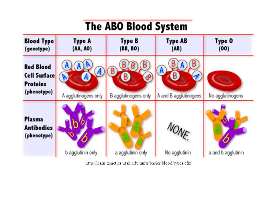 Blood Group AntigensAntibodiesCan give blood to Can receive blood from ABA and BNoneABAB, A, B, O AABA and ABA and O BBAB and ABB and O ONoneA and BAB, A, B, OO