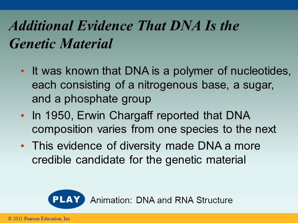 Additional Evidence That DNA Is the Genetic Material It was known that DNA is a polymer of nucleotides, each consisting of a nitrogenous base, a sugar