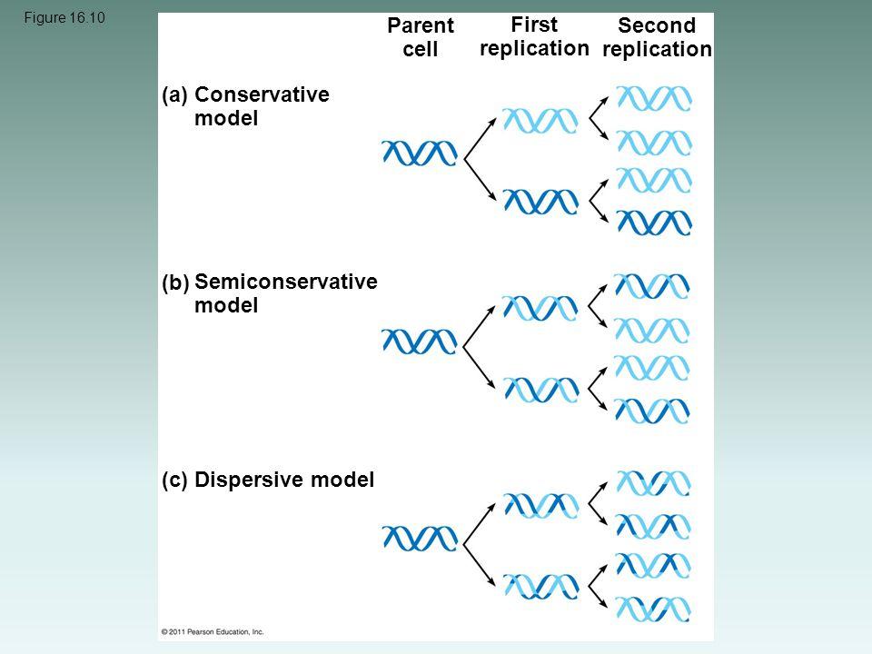 Figure 16.10 (a) Conservative model (b) Semiconservative model (c) Dispersive model Parent cell First replication Second replication
