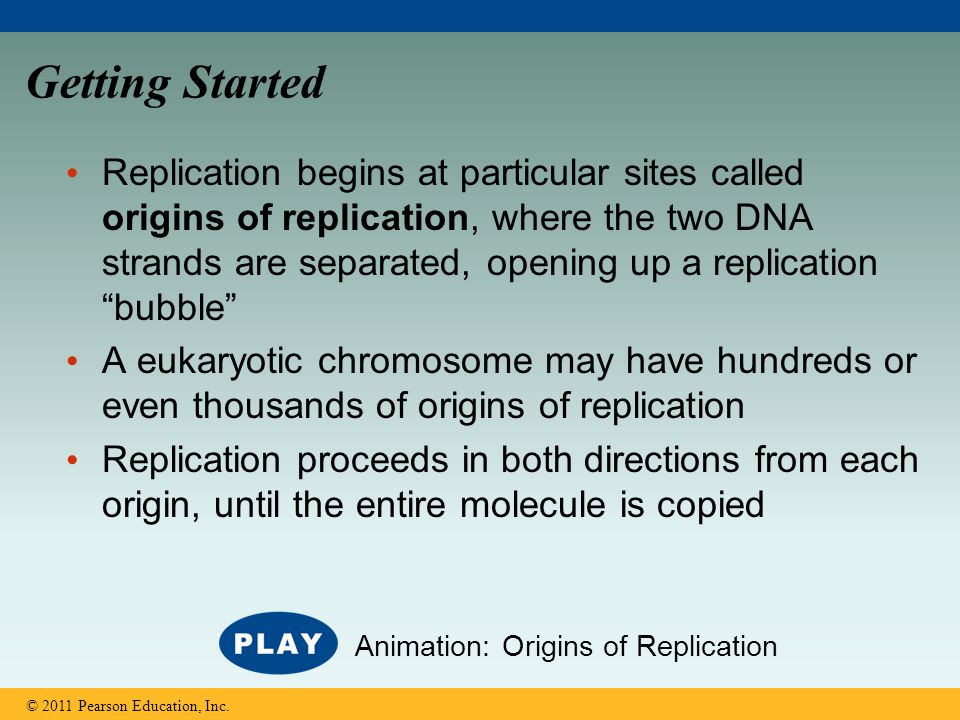 Getting Started Replication begins at particular sites called origins of replication, where the two DNA strands are separated, opening up a replicatio
