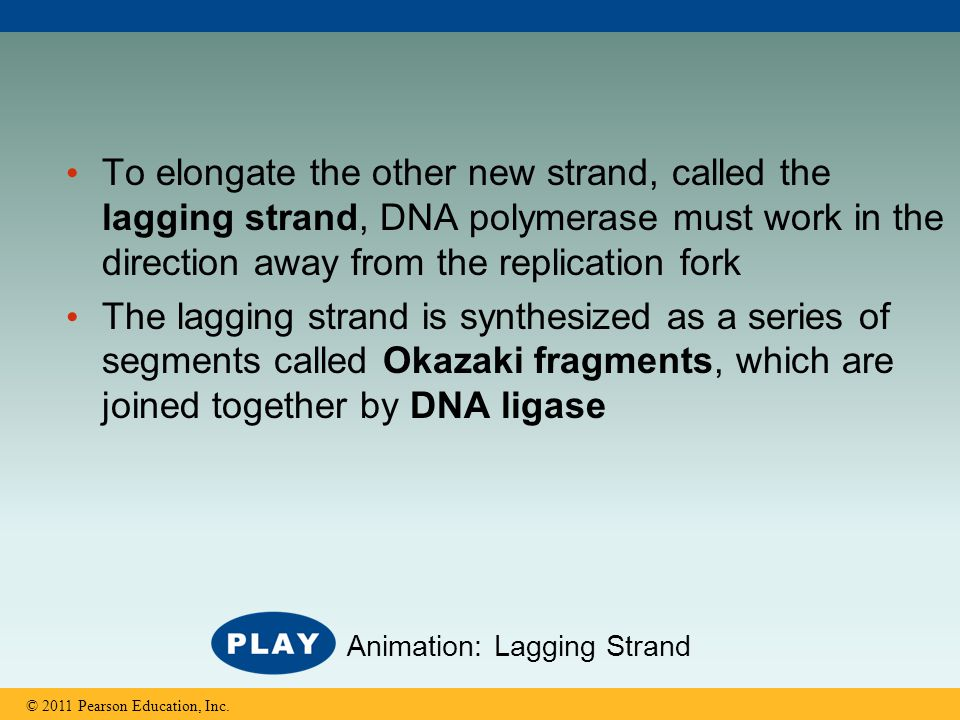 To elongate the other new strand, called the lagging strand, DNA polymerase must work in the direction away from the replication fork The lagging stra