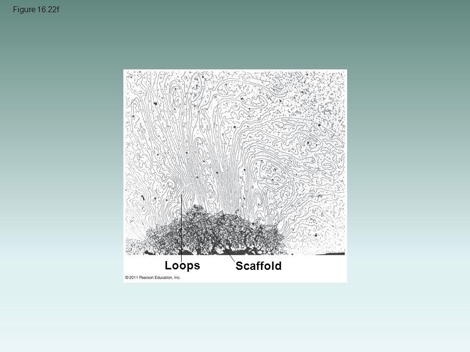 Figure 16.22f Loops Scaffold