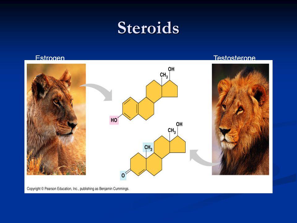 Steroids EstrogenTestosterone