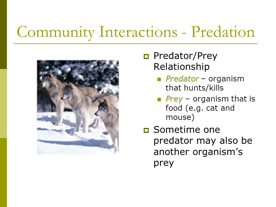 Community Interactions - Predation  Predator/Prey Relationship Predator Predator – organism that hunts/kills Prey Prey – organism that is food (e.g.