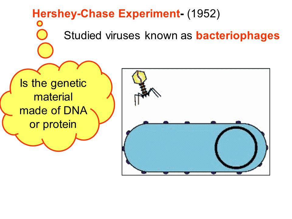DNA made of monomers of nucleotides Nucleotides consist of 3 parts 5-carbon sugar deoxyribose Phosphate group Nitrogen base