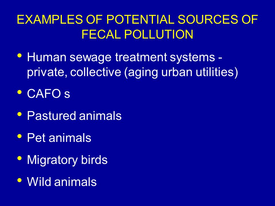 EXAMPLES OF POTENTIAL SOURCES OF FECAL POLLUTION Human sewage treatment systems - private, collective (aging urban utilities) CAFO s Pastured animals Pet animals Migratory birds Wild animals