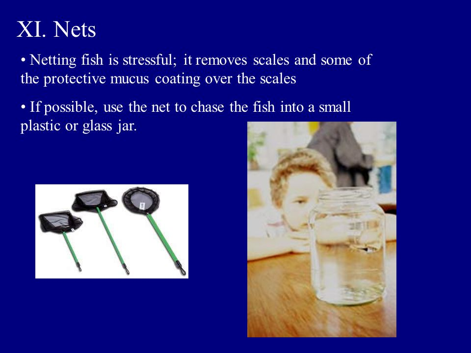 XI. Nets Netting fish is stressful; it removes scales and some of the protective mucus coating over the scales If possible, use the net to chase the f