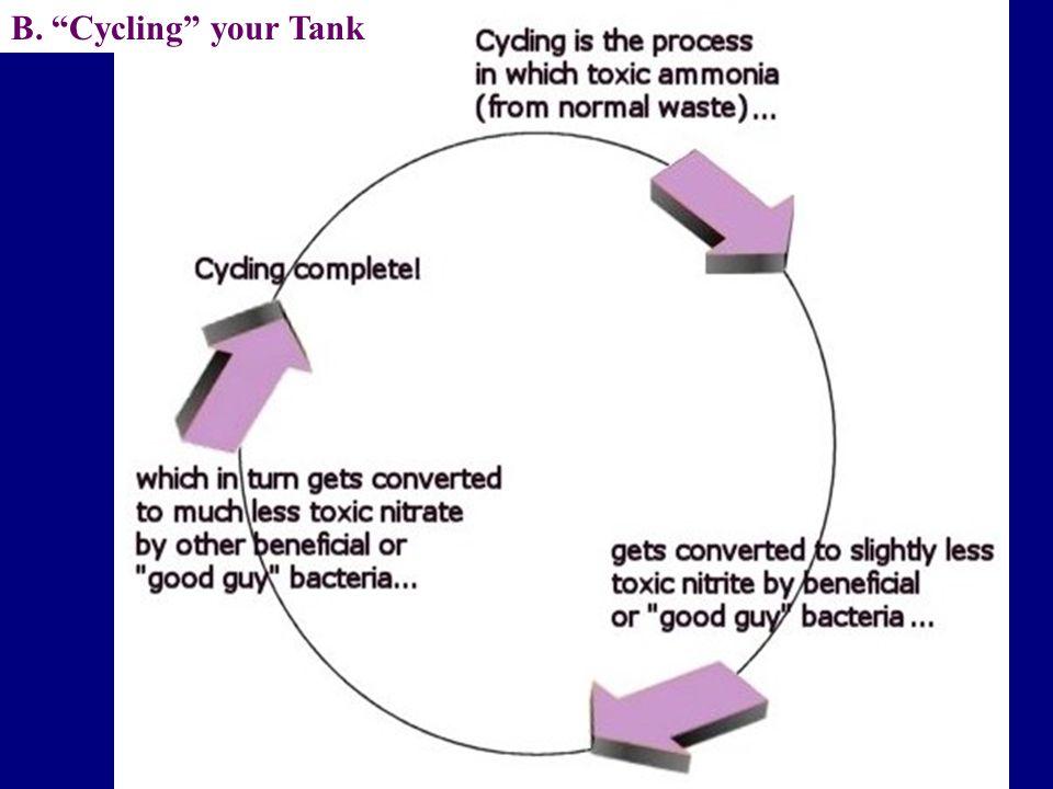 "B. ""Cycling"" your Tank"