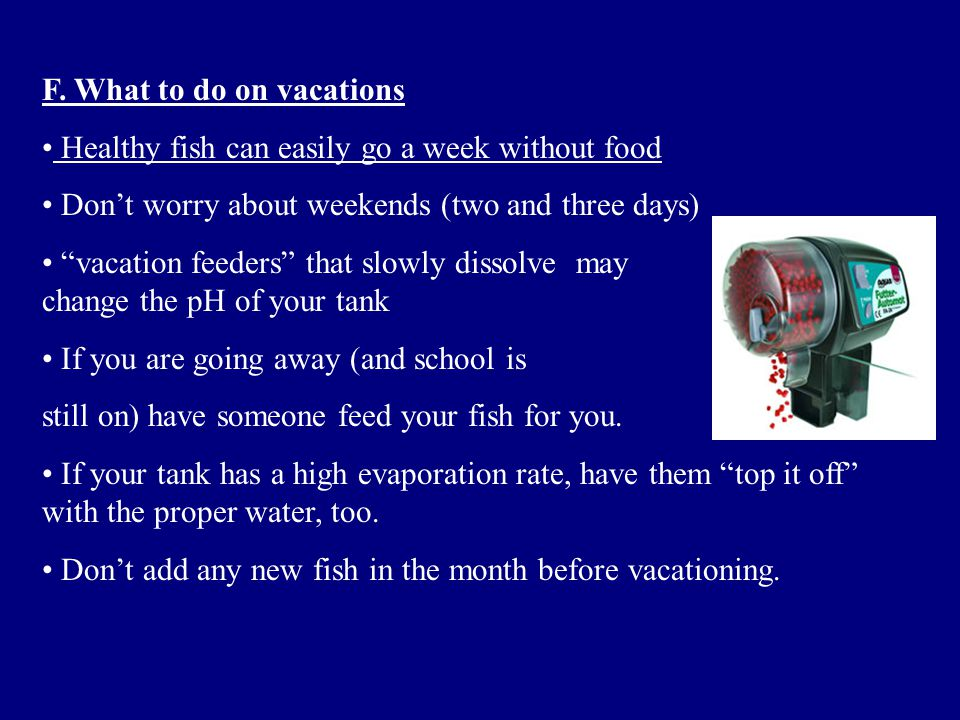 """F. What to do on vacations Healthy fish can easily go a week without food Don't worry about weekends (two and three days) """"vacation feeders"""" that slow"""