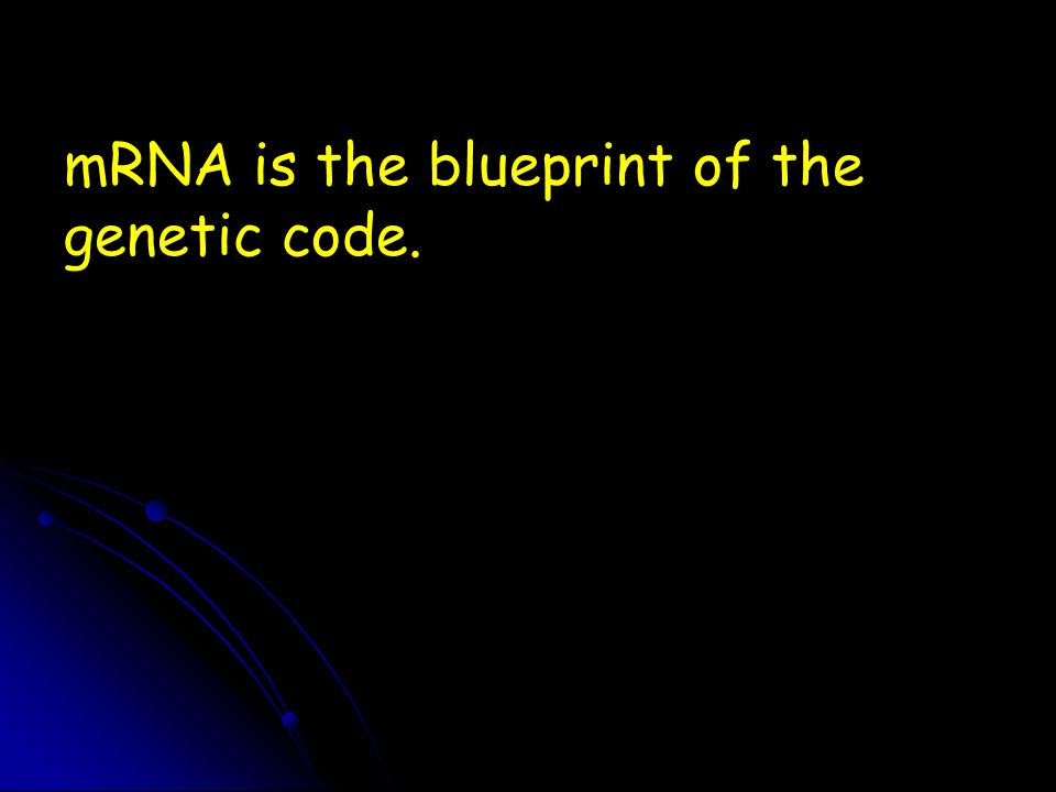 mRNA is the blueprint of the genetic code.