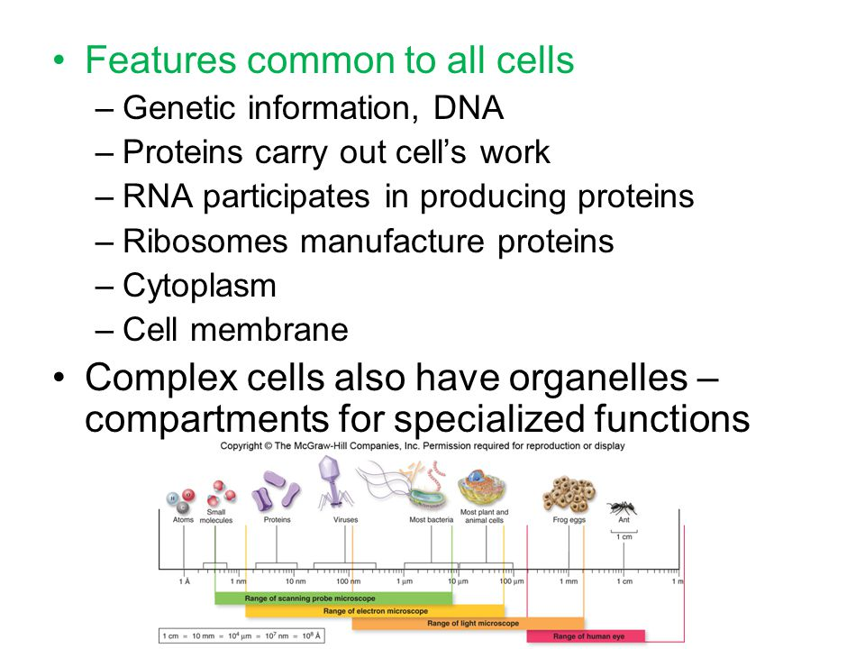 Features common to all cells –Genetic information, DNA –Proteins carry out cell's work –RNA participates in producing proteins –Ribosomes manufacture