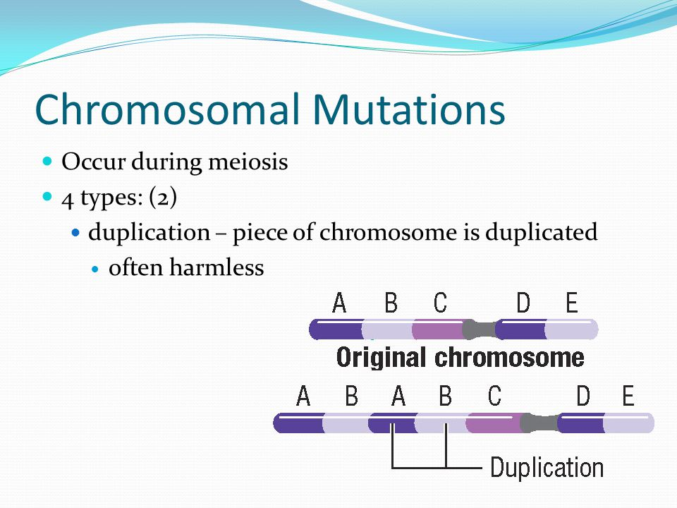 Chromosomal Mutations Occur during meiosis 4 types: (2) duplication – piece of chromosome is duplicated often harmless