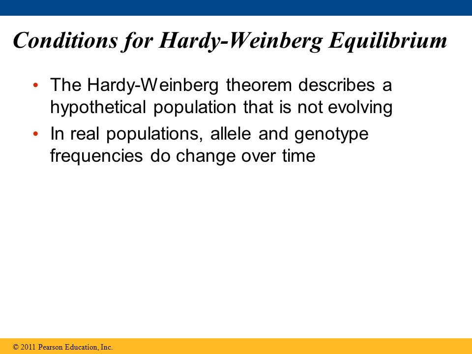 Conditions for Hardy-Weinberg Equilibrium The Hardy-Weinberg theorem describes a hypothetical population that is not evolving In real populations, all