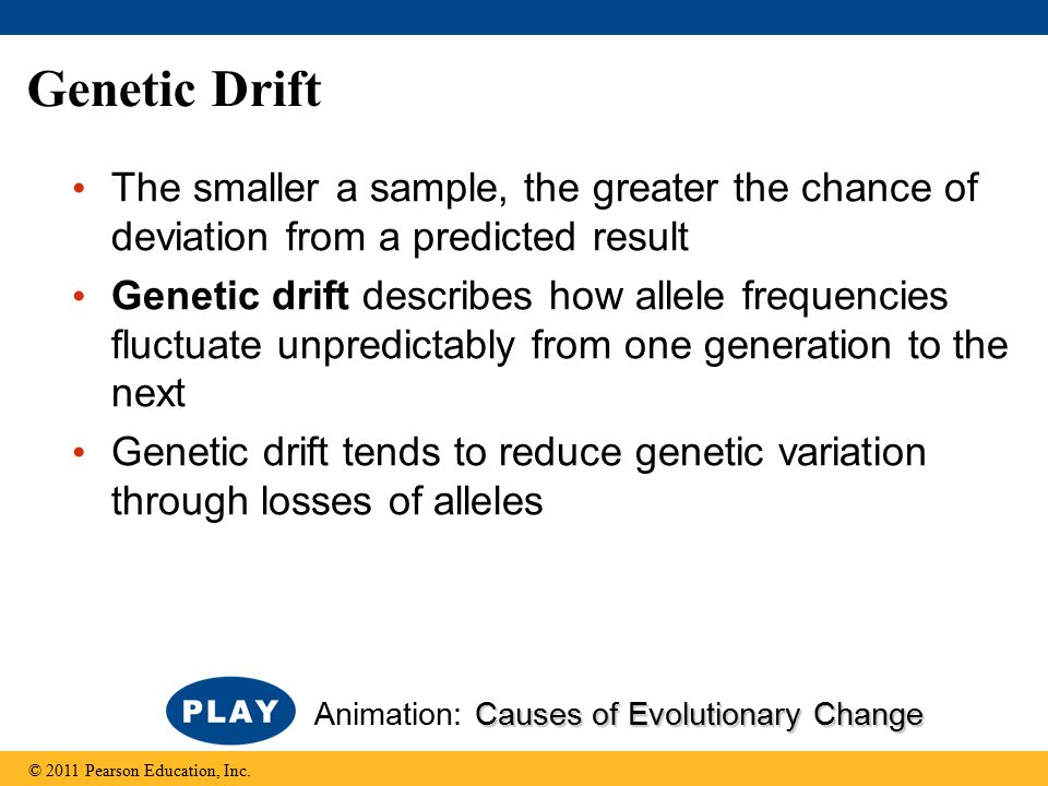 Genetic Drift The smaller a sample, the greater the chance of deviation from a predicted result Genetic drift describes how allele frequencies fluctua