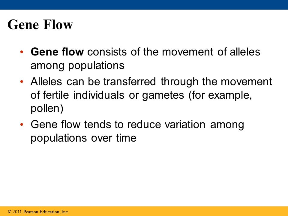 Gene Flow Gene flow consists of the movement of alleles among populations Alleles can be transferred through the movement of fertile individuals or ga