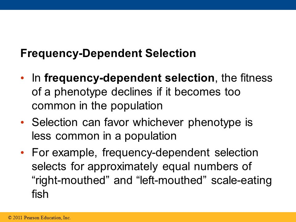 In frequency-dependent selection, the fitness of a phenotype declines if it becomes too common in the population Selection can favor whichever phenoty