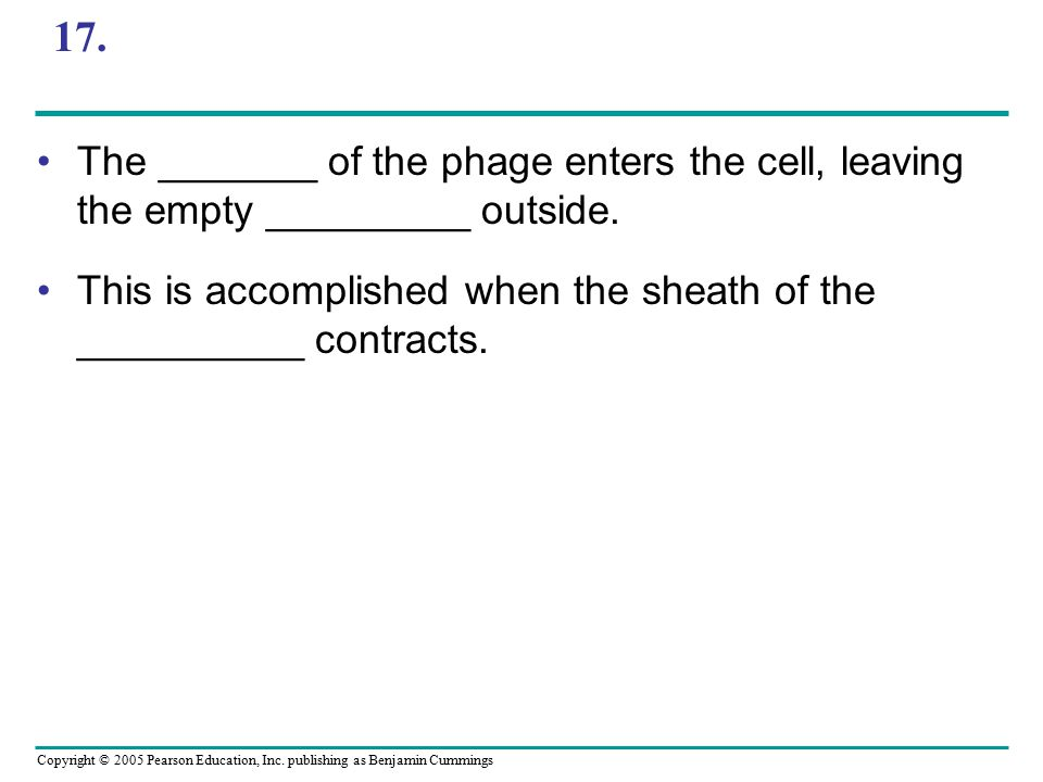 Copyright © 2005 Pearson Education, Inc. publishing as Benjamin Cummings 17. The _______ of the phage enters the cell, leaving the empty _________ out