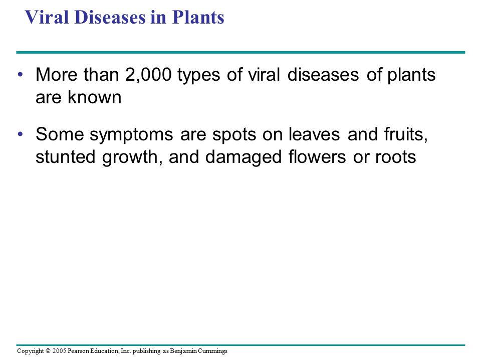 Copyright © 2005 Pearson Education, Inc. publishing as Benjamin Cummings Viral Diseases in Plants More than 2,000 types of viral diseases of plants ar