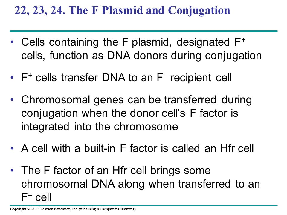 Copyright © 2005 Pearson Education, Inc. publishing as Benjamin Cummings 22, 23, 24. The F Plasmid and Conjugation Cells containing the F plasmid, des