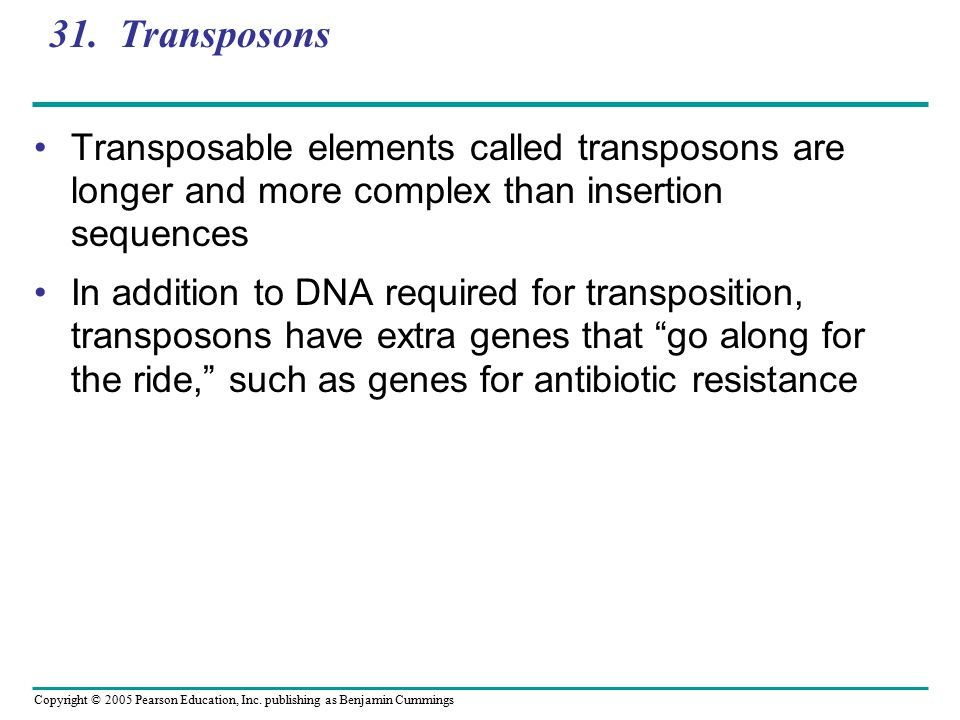 Copyright © 2005 Pearson Education, Inc. publishing as Benjamin Cummings 31. Transposons Transposable elements called transposons are longer and more