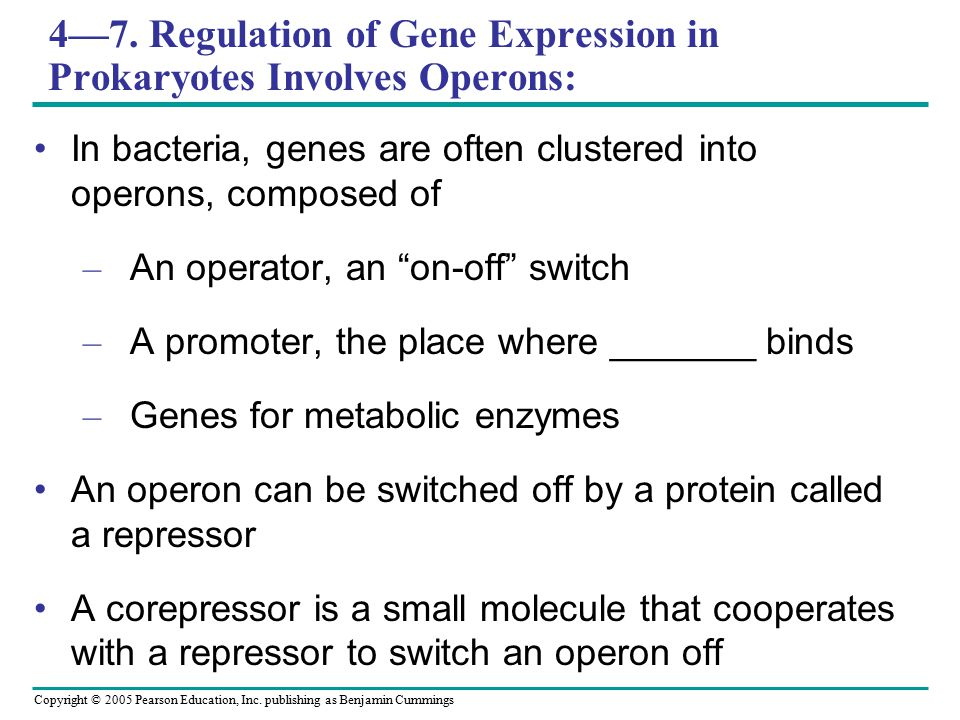 Copyright © 2005 Pearson Education, Inc. publishing as Benjamin Cummings 4—7. Regulation of Gene Expression in Prokaryotes Involves Operons: In bacter
