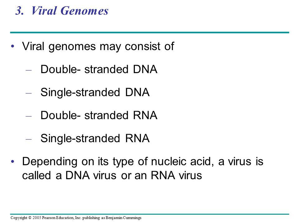 Copyright © 2005 Pearson Education, Inc. publishing as Benjamin Cummings 3. Viral Genomes Viral genomes may consist of – Double- stranded DNA – Single