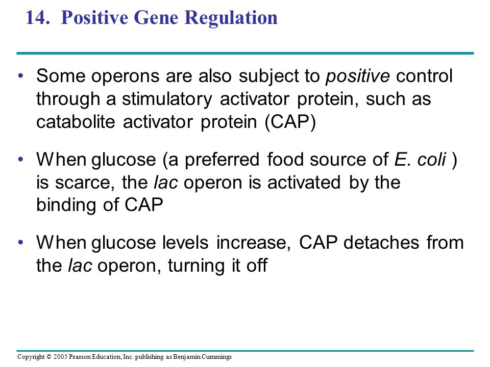 Copyright © 2005 Pearson Education, Inc. publishing as Benjamin Cummings 14. Positive Gene Regulation Some operons are also subject to positive contro