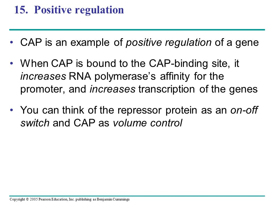 Copyright © 2005 Pearson Education, Inc. publishing as Benjamin Cummings 15. Positive regulation CAP is an example of positive regulation of a gene Wh