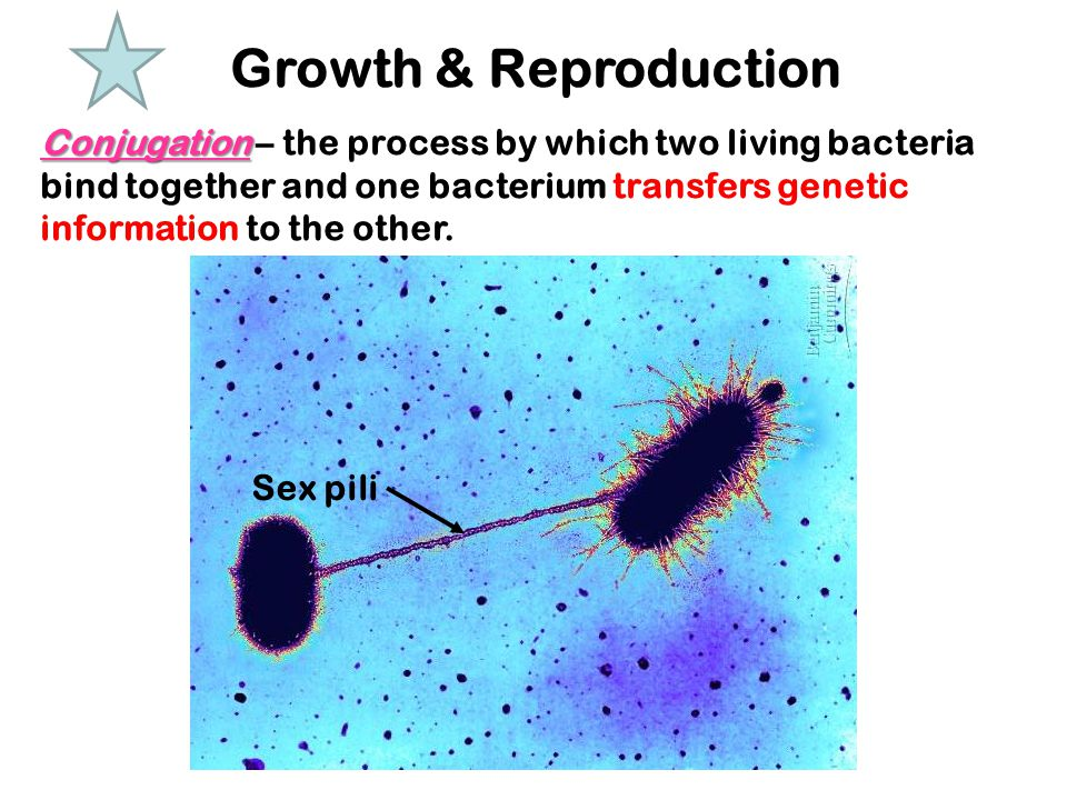 Growth & Reproduction Conjugation Conjugation – the process by which two living bacteria bind together and one bacterium transfers genetic information