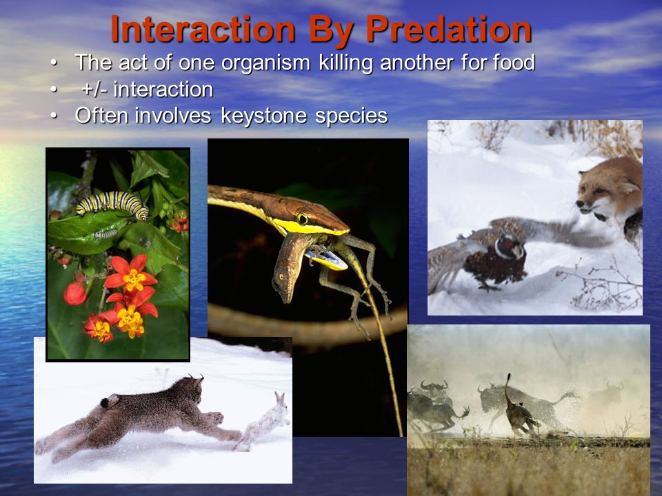 Interaction By Predation The act of one organism killing another for foodThe act of one organism killing another for food +/- interaction +/- interact