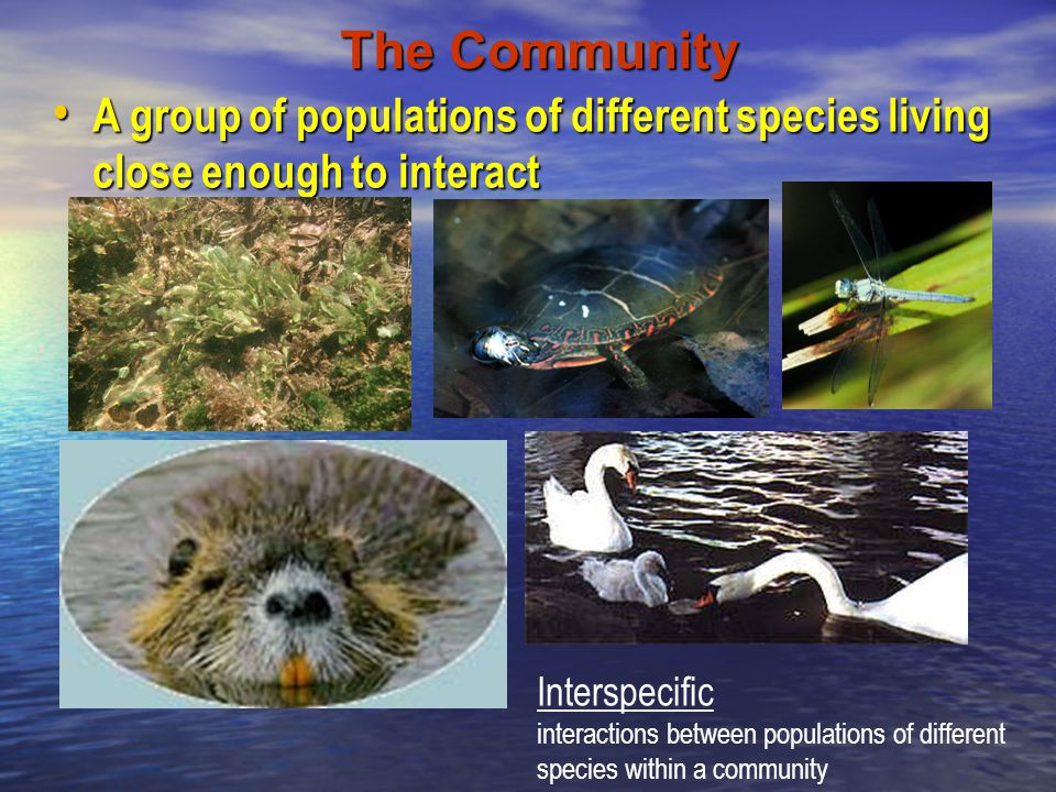 The Community A group of populations of different species living close enough to interact A group of populations of different species living close eno