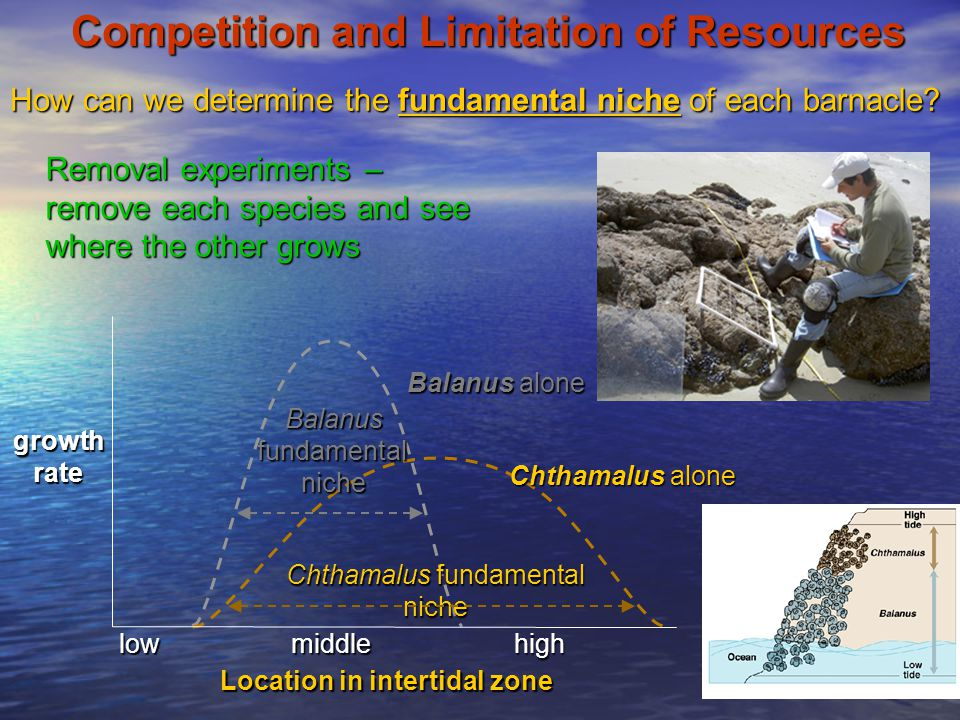 Competition and Limitation of Resources growthrate Location in intertidal zone lowhighmiddle Chthamalus alone Balanus alone How can we determine the f