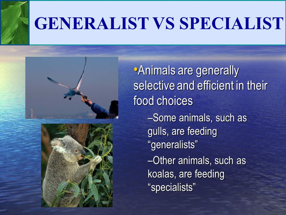 GENERALIST VS SPECIALIST Animals are generally selective and efficient in their food choices Animals are generally selective and efficient in their fo