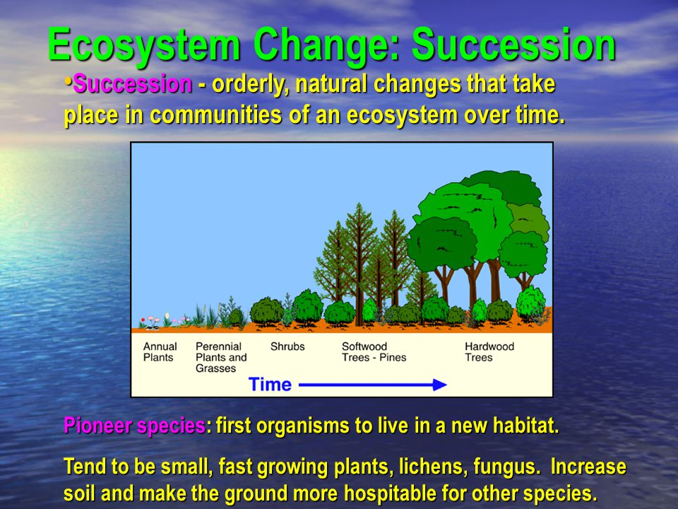 Succession - orderly, natural changes that take place in communities of an ecosystem over time. Succession - orderly, natural changes that take place