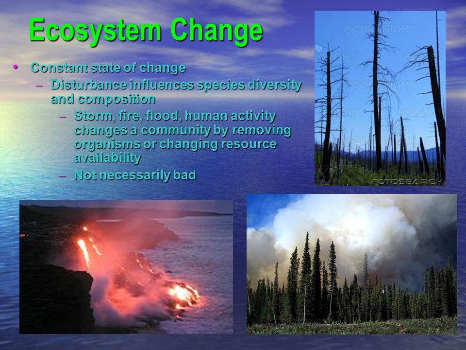 Ecosystem Change Constant state of change Constant state of change – Disturbance influences species diversity and composition – Storm, fire, flood, hu