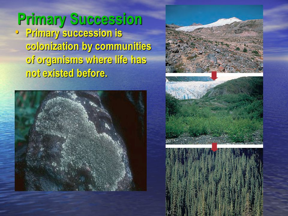Primary Succession Primary succession is colonization by communities of organisms where life has not existed before. Primary succession is colonizatio