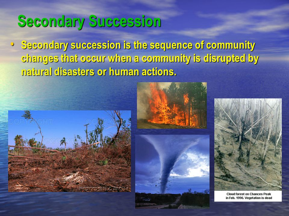 Secondary Succession Secondary succession is the sequence of community changes that occur when a community is disrupted by natural disasters or human