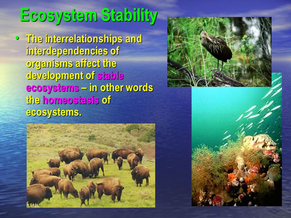 Ecosystem Stability The interrelationships and interdependencies of organisms affect the development of stable ecosystems – in other words the homeost
