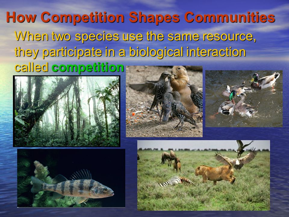 When two species use the same resource, they participate in a biological interaction called competition How Competition Shapes Communities
