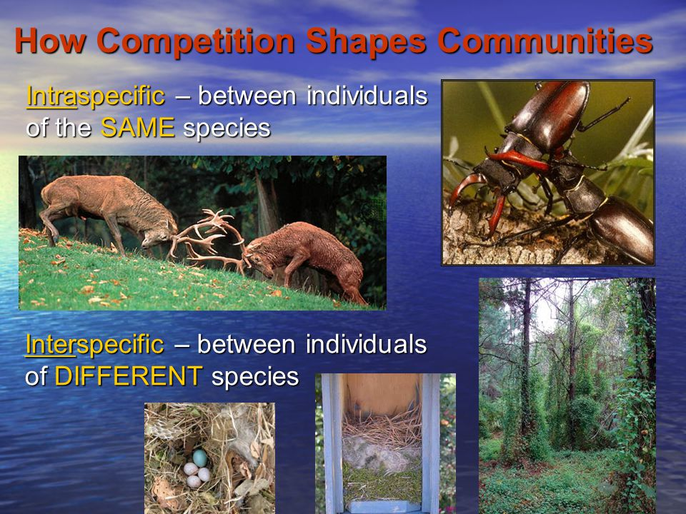 Interspecific Competition Competition occurs when resources are in short supplyCompetition occurs when resources are in short supply Competition is -/- interaction between the species involvedCompetition is -/- interaction between the species involved