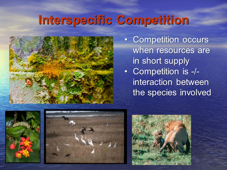 Interspecific Competition Competition occurs when resources are in short supplyCompetition occurs when resources are in short supply Competition is -/